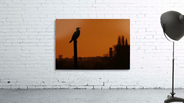 Cormorant perch