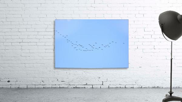 Flock of Geese 3