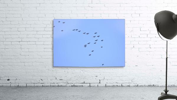 Flock of Geese 2