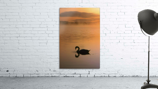 Lough Leane, Lakes Of Killarney, Co Kerry, Ireland; Silhouetted Swan