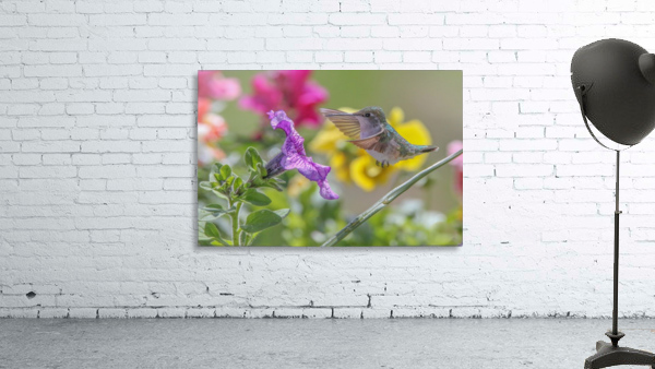 Humming Bird Purple Flower Photo by Jason Andrew Smith