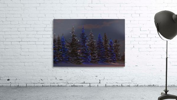Calgary, Alberta, Canada; A Row Of Evergreen Trees With Christmas Lights