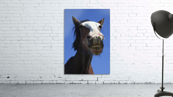 A Horse Smiling And Showing It's Teeth; Northumberland, England