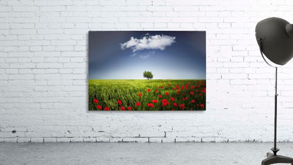 Lone tree a poppies field