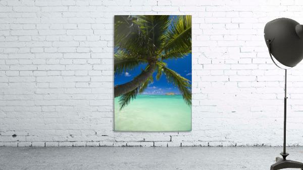 USA, Hawaii, Oahu, Palm tree over Pacific ocean with Mokulua island in background; Lanikai