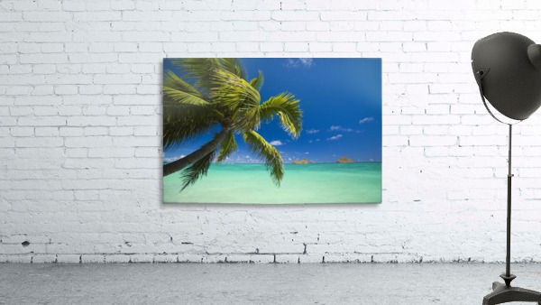 USA, Hawaii, Oahu, Mokulua island in background; Lanikai, Palm tree over Pacific Ocean