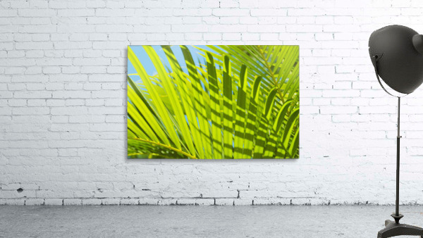 Close-Up Detail Of Light Green Palm Leaves With Shadow Pattern Against Blue Sky