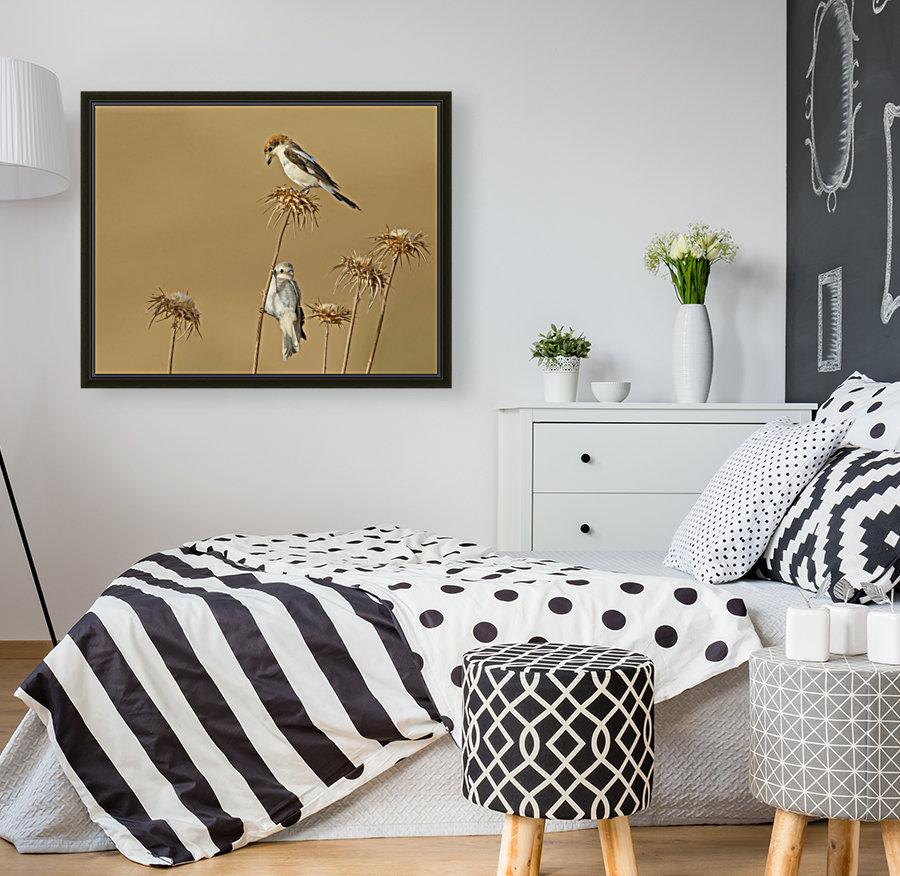 Woodchat Shrike  Art