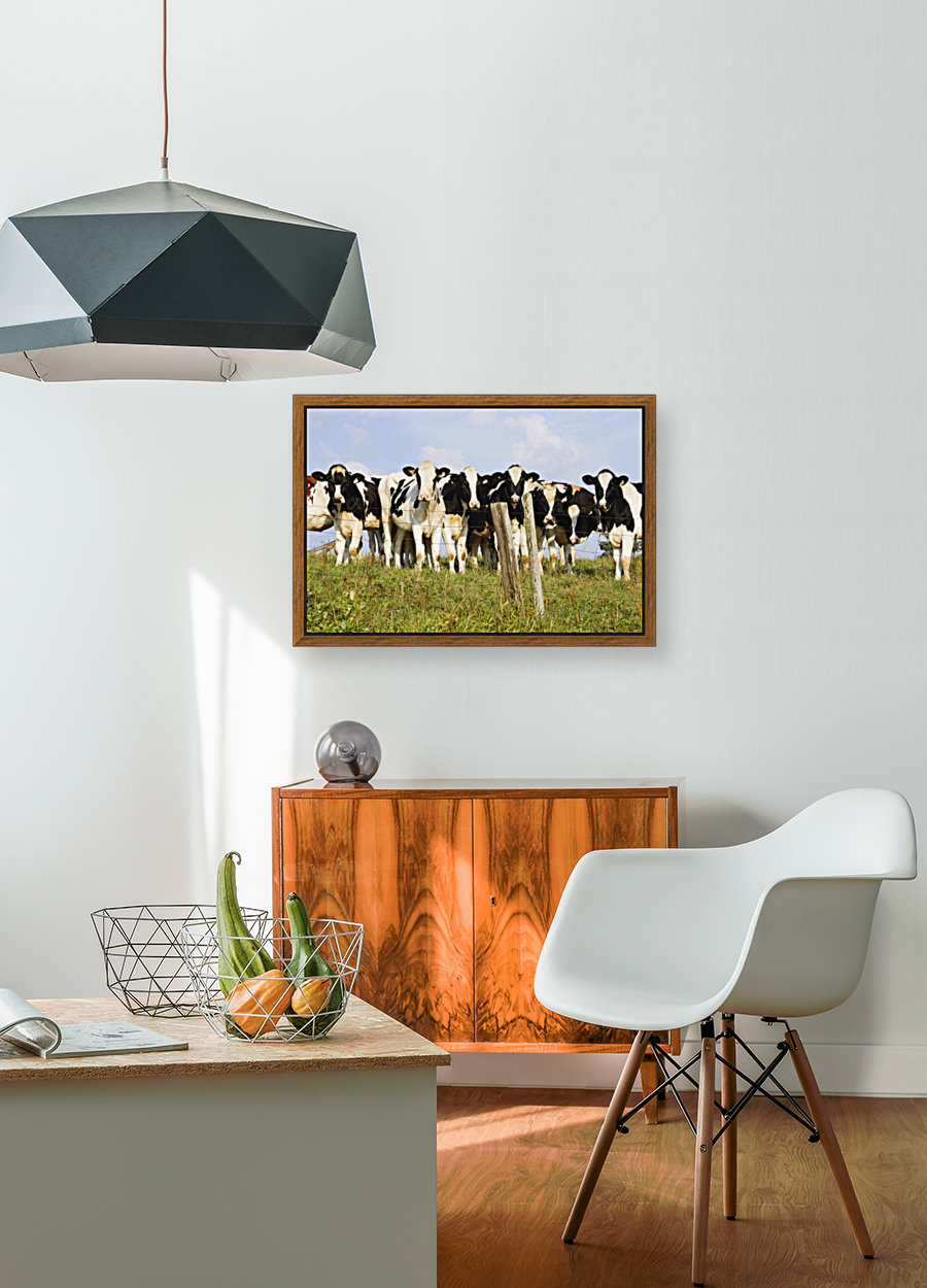 View Of Cows, Bas-Saint-Laurent Region, Quebec, Canada  Art
