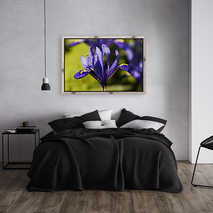 Dwarf Iris blooms in February; Oregon, United States of America  Art