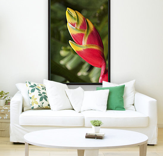 Close-up of lobster-claw heliconia flower; Maui, Hawaii, United States of America  Art