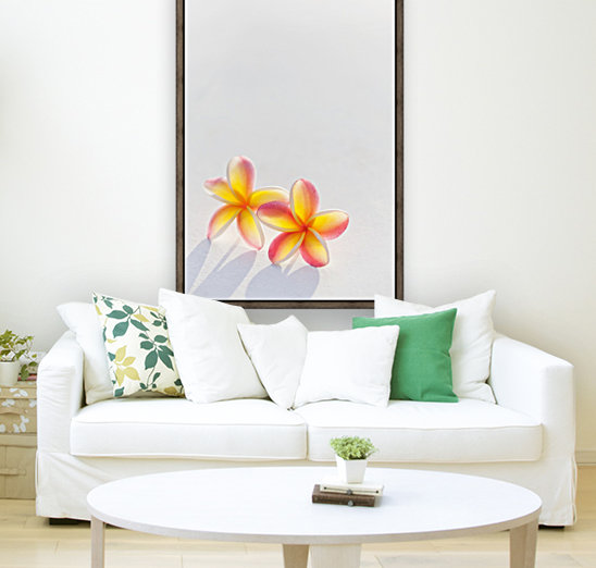 A pair of beautiful yellow and pink Plumeria flowers together (Apocynaceae) on a white background; Honolulu, Oahu, Hawaii, United States of America  Art