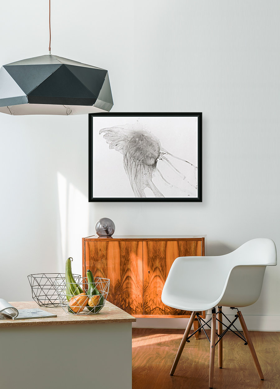 Jellyfish against a white background  Art