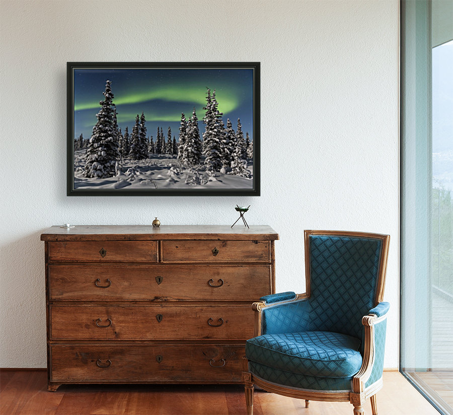 Green Aurora Borealis dances over the tops of snow covered black spruce trees, moonlight casting shadows on a clear winter night, interior Alaska; Gakona, Alaska, United States of America  Art