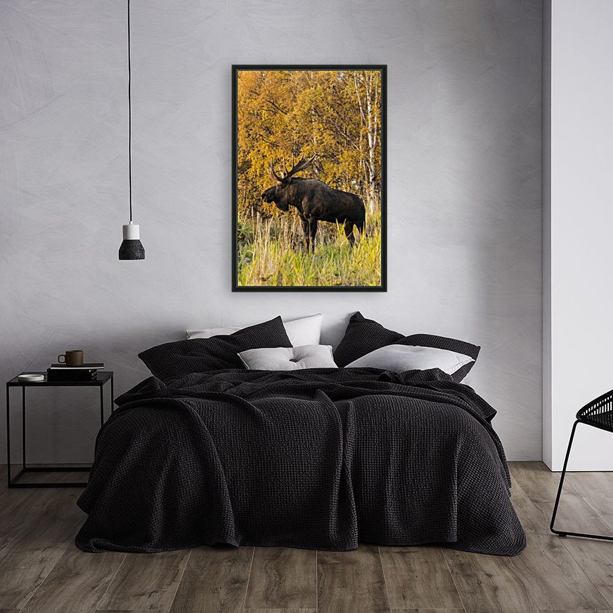 Bull moose (alces alces) with antlers, South-central Alaska; Anchorage, Alaska, United States of America  Art