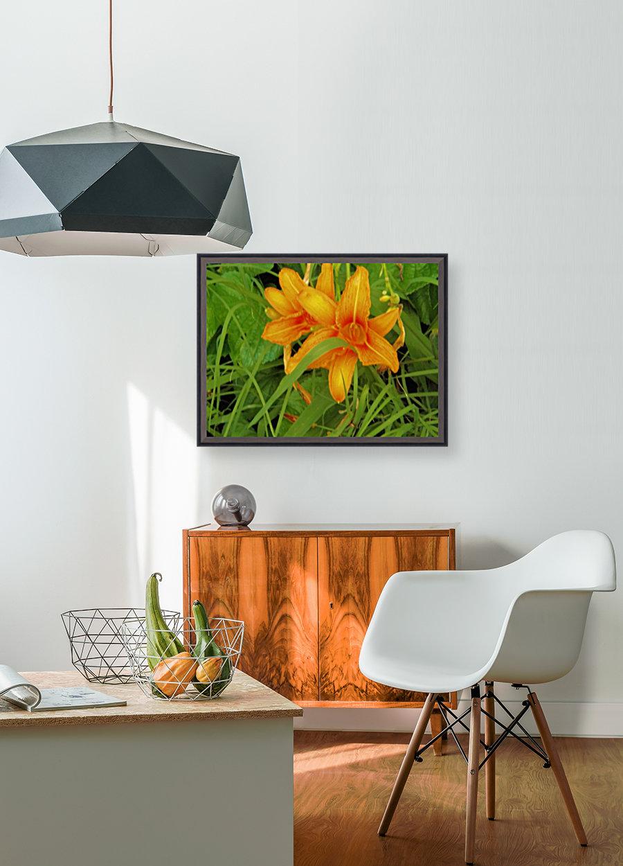 Oranger Lilly 2  Art