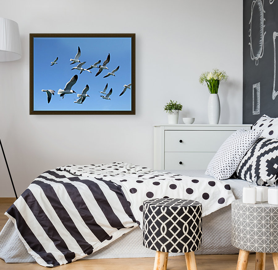 Seagulls against a clear blue sky with Floating Frame