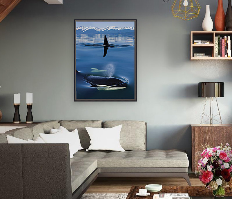 Composite: Close Up Of Orca Whales As They Surface In Lynn Canal With The Coast Range Mountains In The Background, Inside Passage, Southeast Alaska  Art