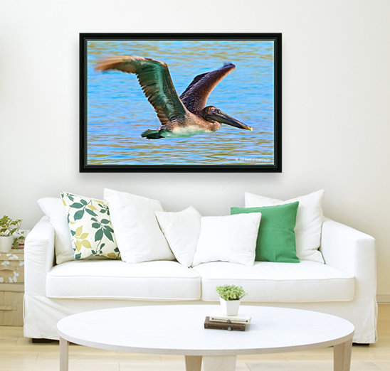 Trunk Bay Pelican  Art