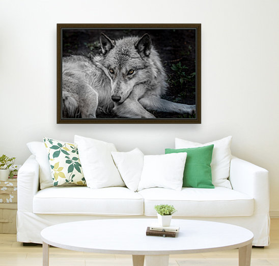 WolfDog with Floating Frame