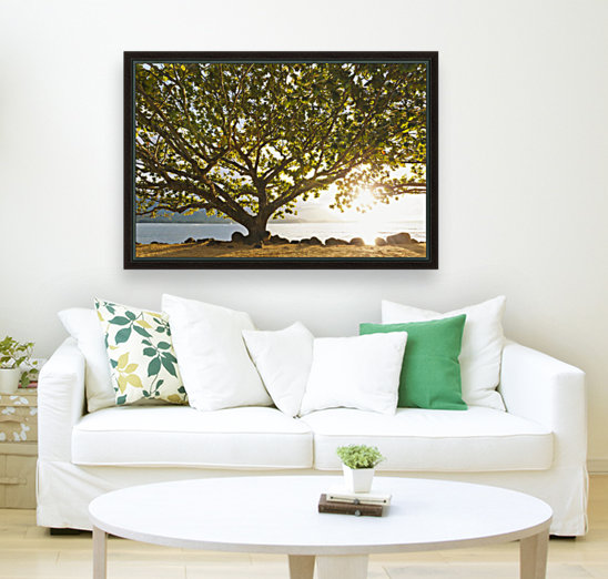 Hawaii, Kauai, Hanalei Bay, Large tree on beach, Sun shining.  Art