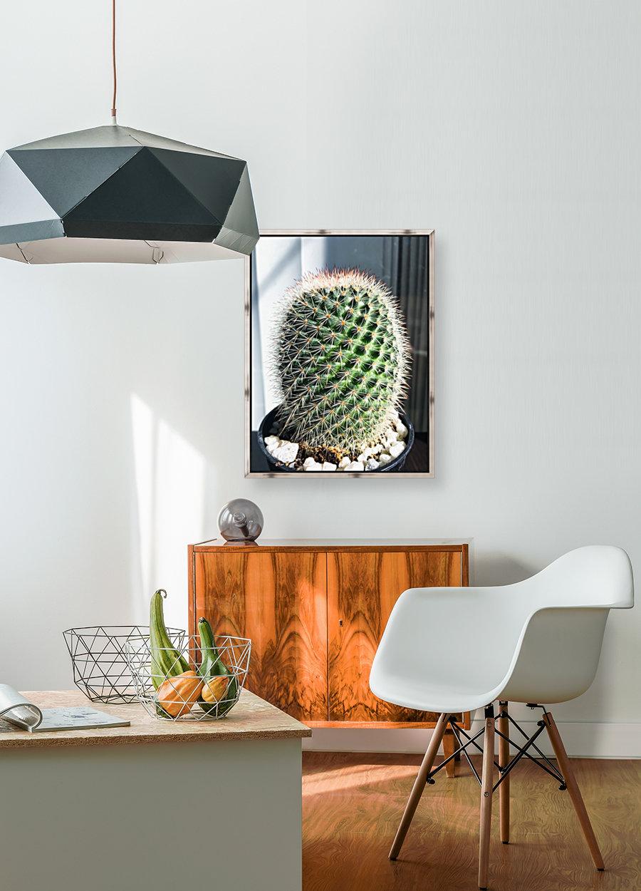 closeup green cactus texture with morning sunlight  Art