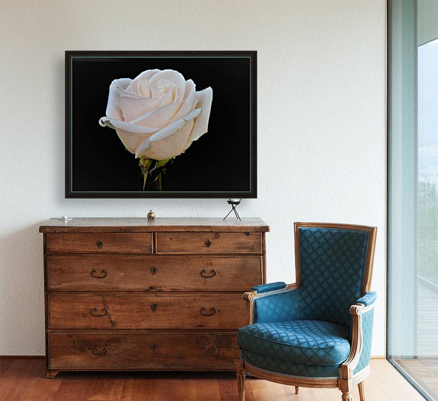 Calming rose  Art