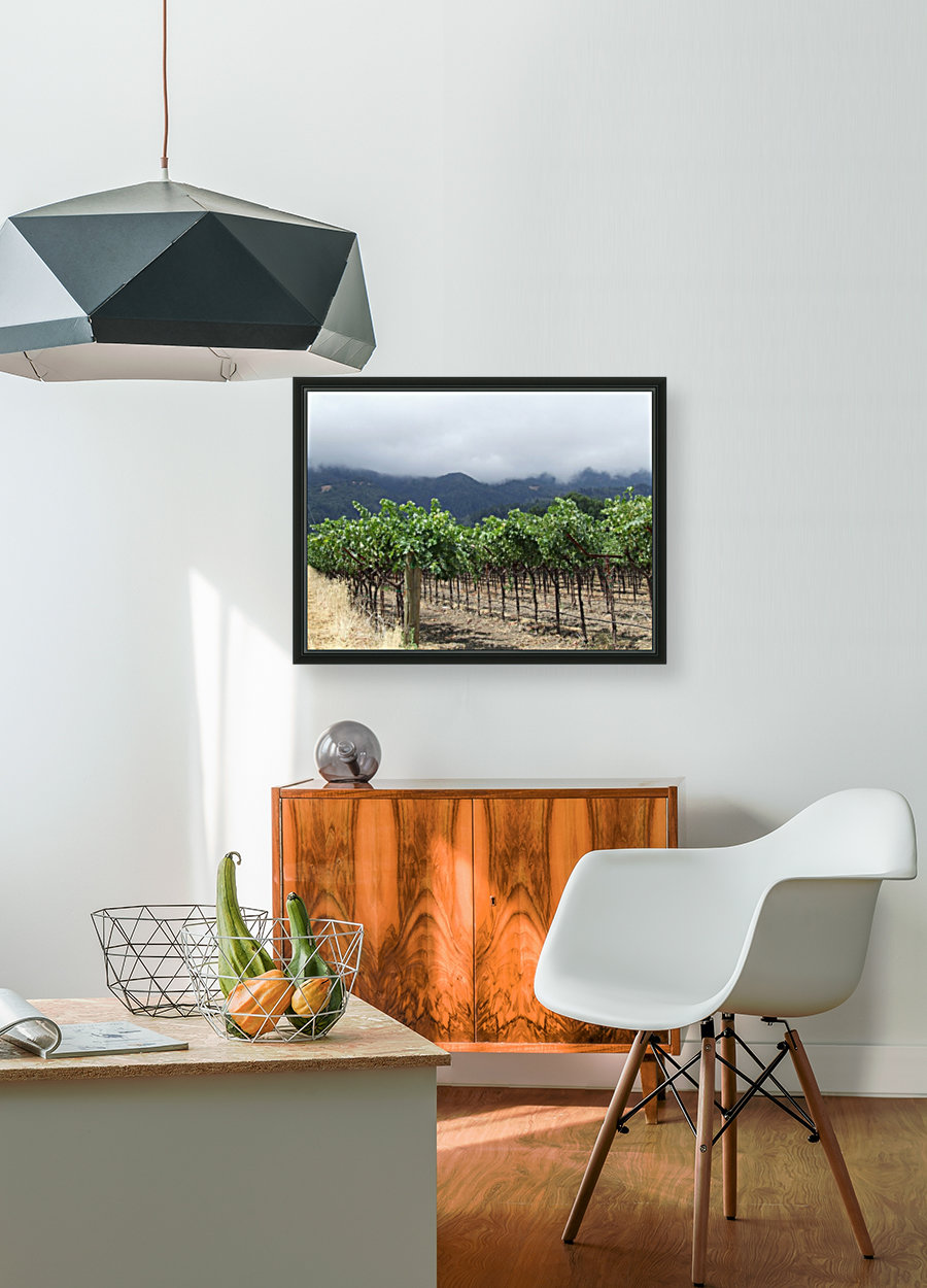 Napa Califoria Grape Vines summer 2007  with Floating Frame