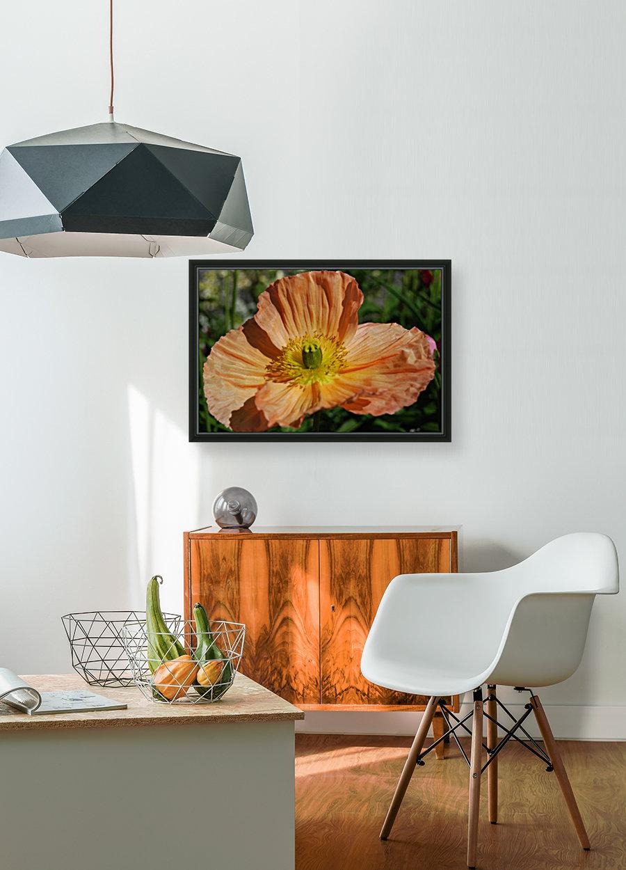 A Poppy Flower Growing  Art