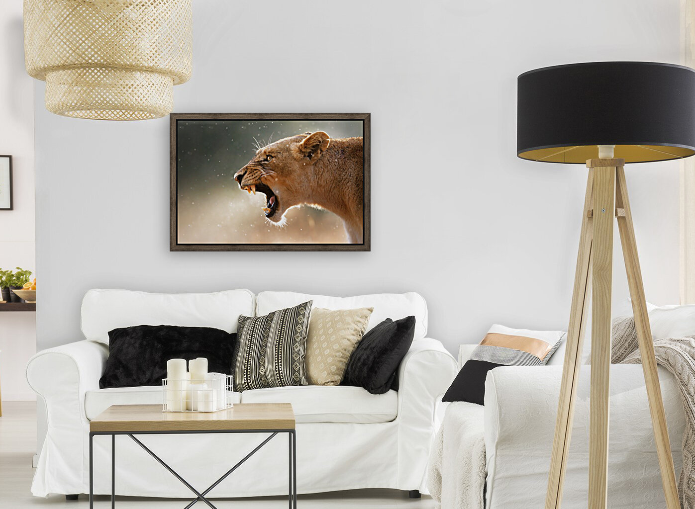 Lioness in the rain with Floating Frame