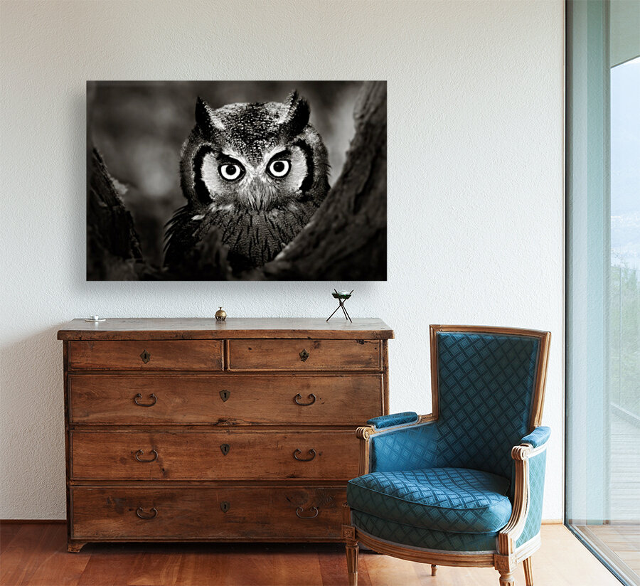 Whitefaced Owl close-up  Art