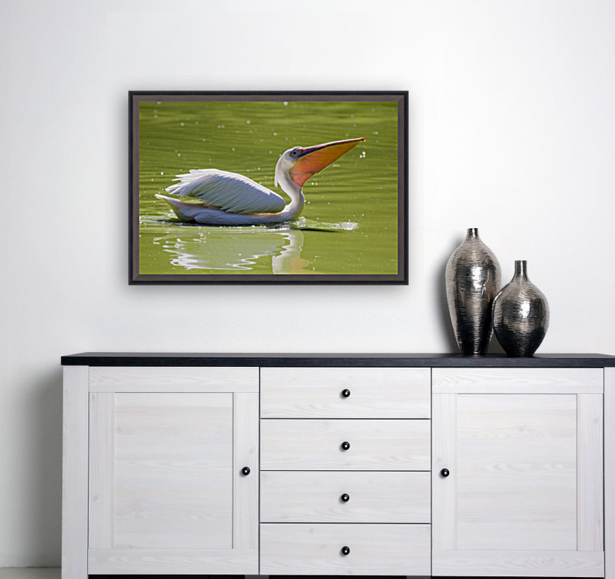 Pelican with Floating Frame