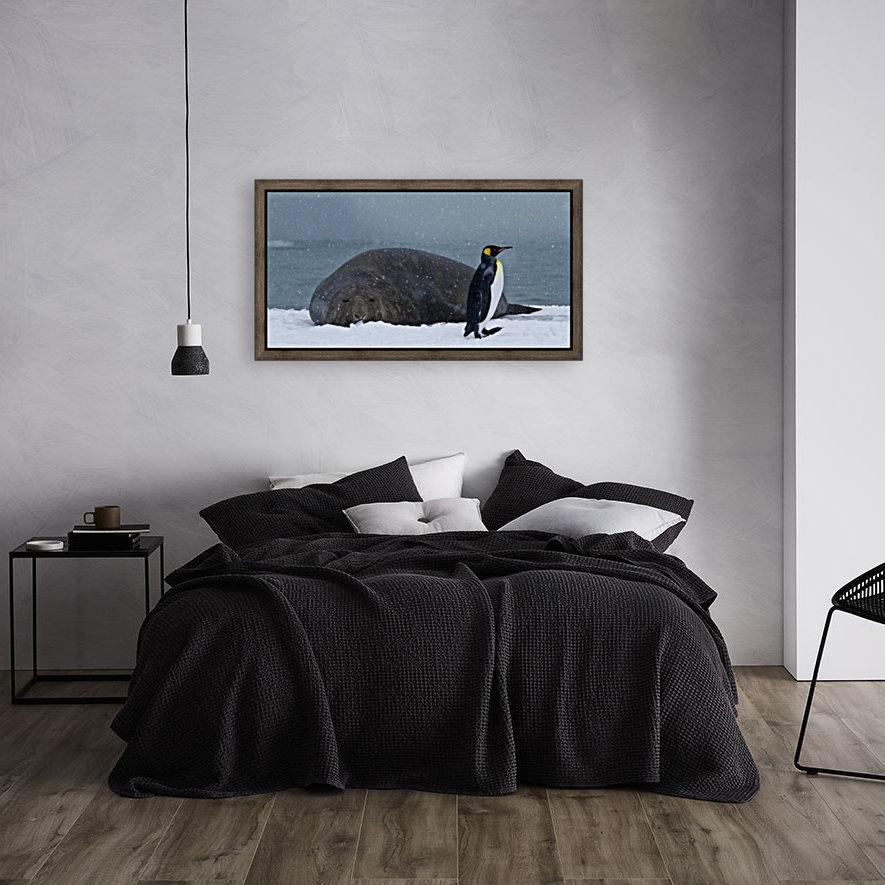 King Penguin walking nest to Elephant Seal  Art