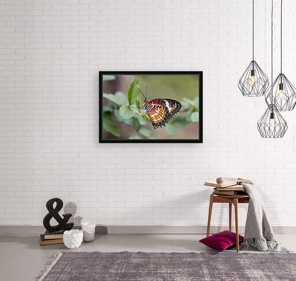 Leopard lacewing   Art