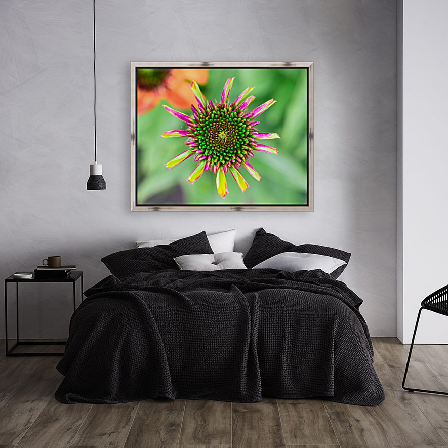Echinacea with Floating Frame