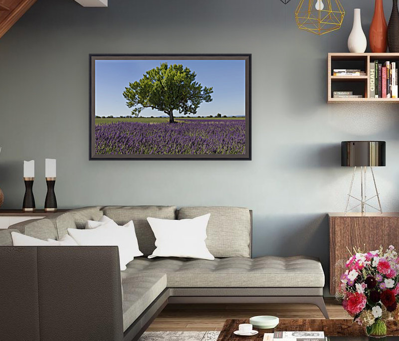 Tree in a lavender field with Floating Frame