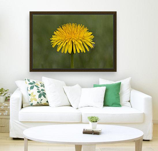 Dandelion macro  Art