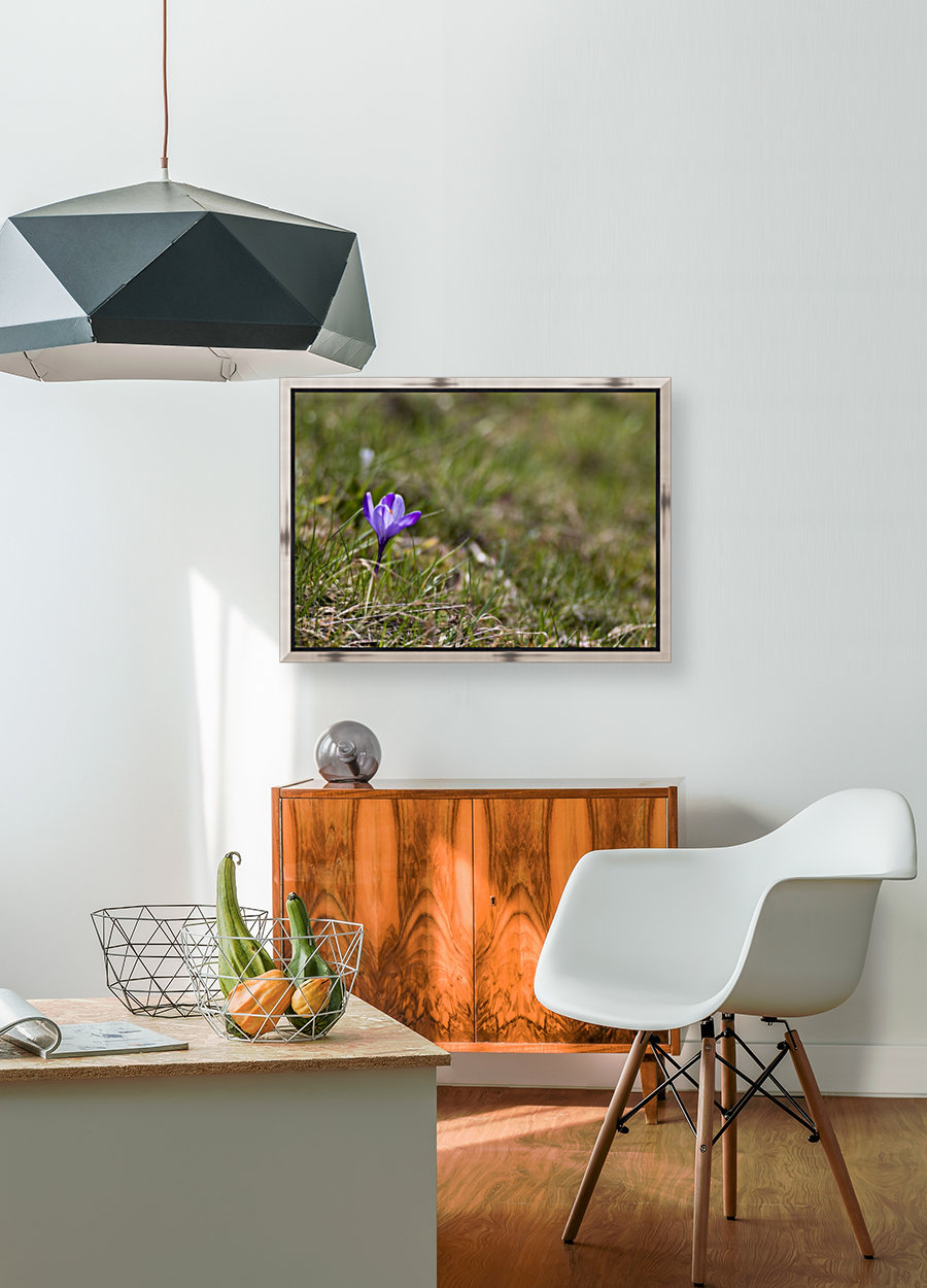 Crocus with Floating Frame