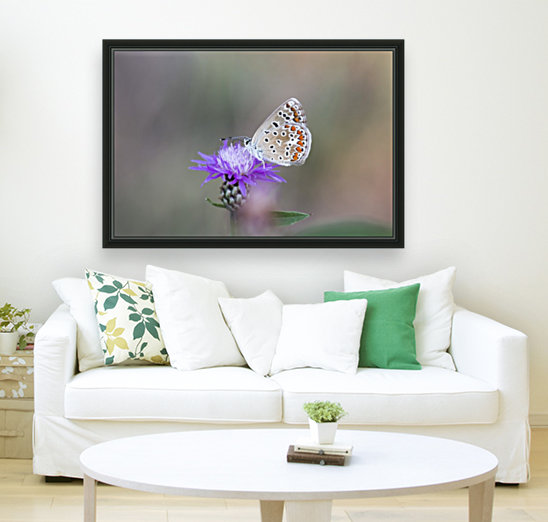 Common blue butterfly  Art