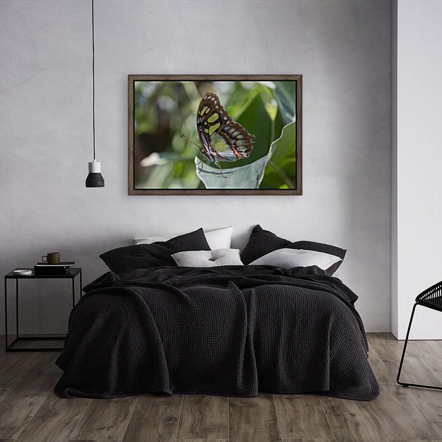 Malachite butterfly  Art