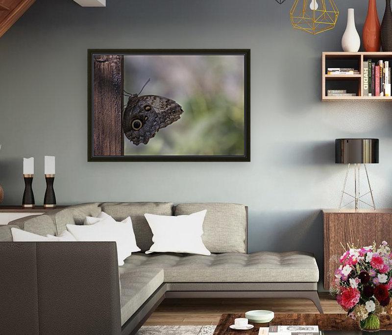 Owl butterfly  Art