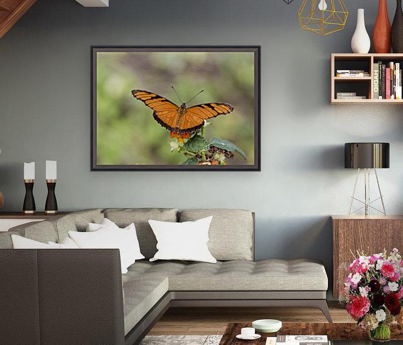 Julia heliconian butterfly  Art