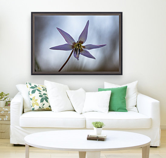 Dogtooth violet with Floating Frame