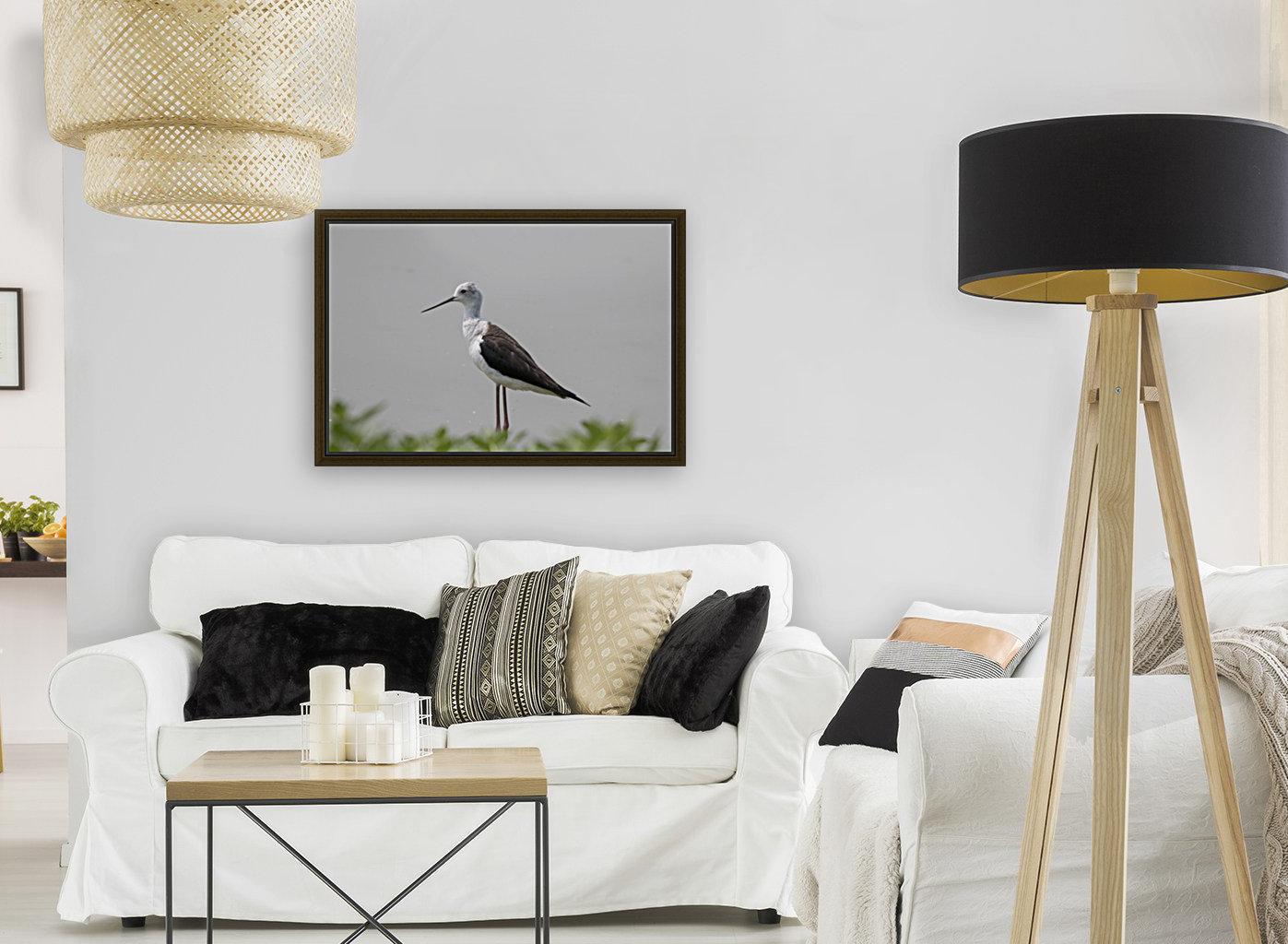Black winged stilt  Art