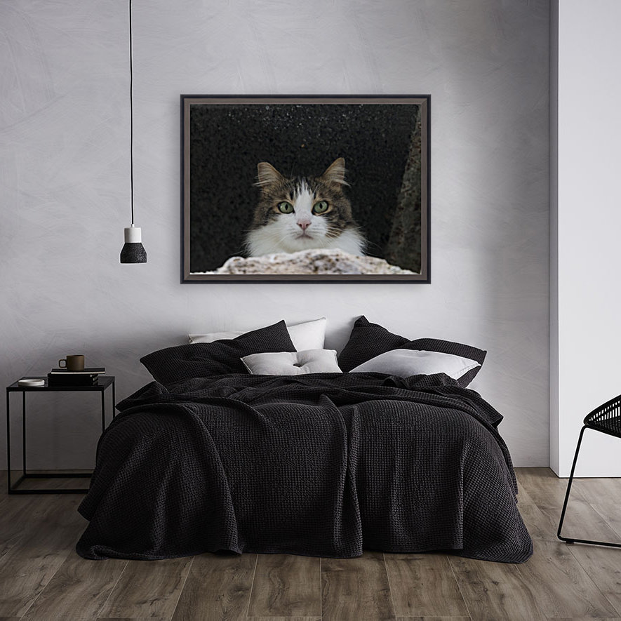 Cat portrait with Floating Frame