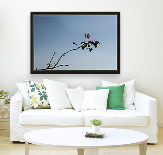 Bouganvillea with Floating Frame