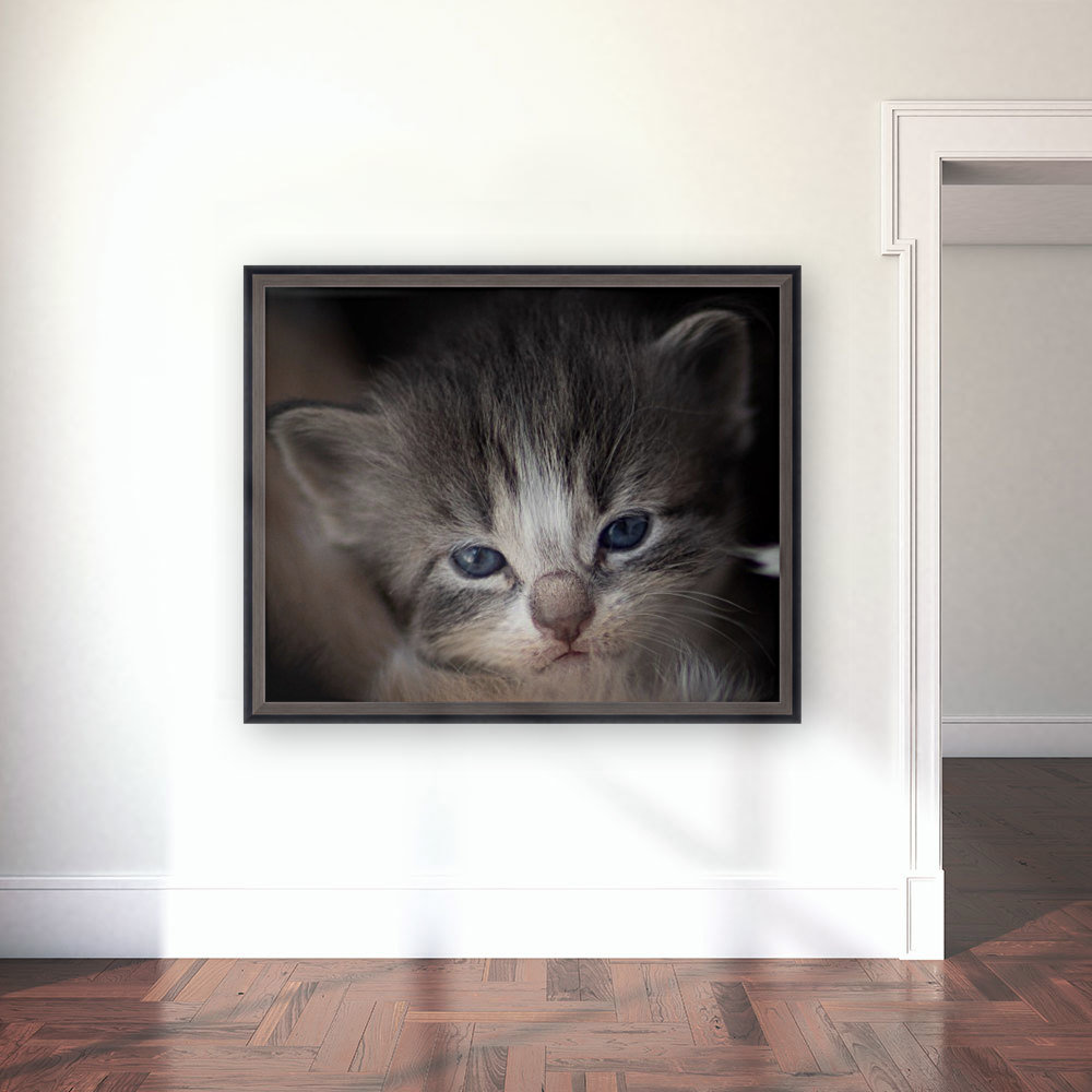 Kitten Face with Floating Frame
