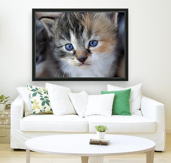 Kitten Face  Art