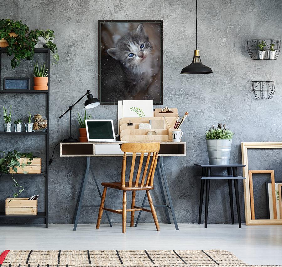 Gray Kitten  Art