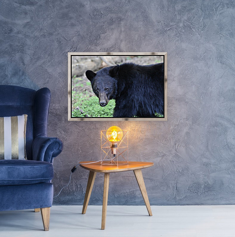2350- black bear  Art